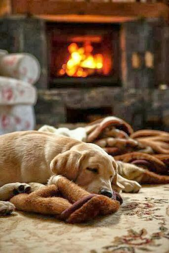 Dogs are welcome and they love the walks over fields and hills.  there is nothing like a good sleep in front of a wood burning stove when you are dog tired.