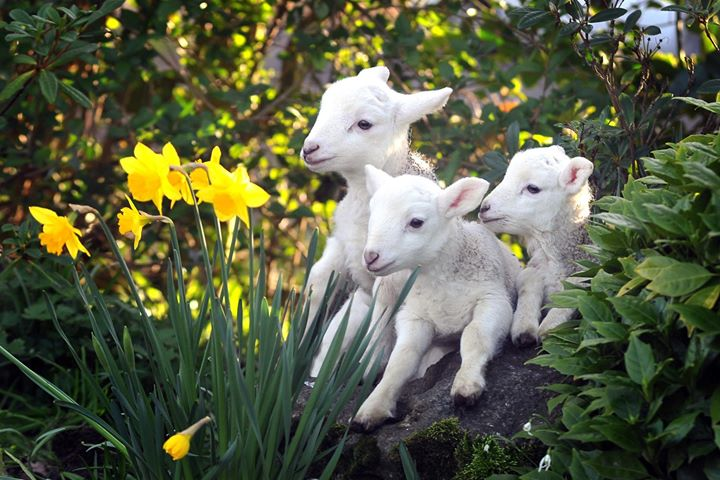 No bookings yet for Easter and the daffodils are coming out so spring is on its way.  Book a Spring break in this exotic location before it is too late.  Lambs also are just beginning and jumping around in excitement.